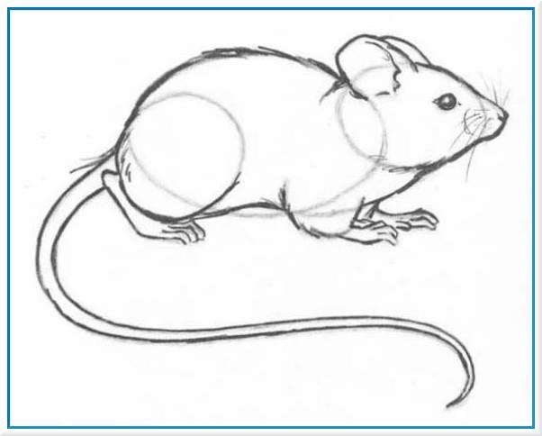 Как рисовать мышь карандашом