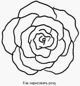 kak-risovat-rozu