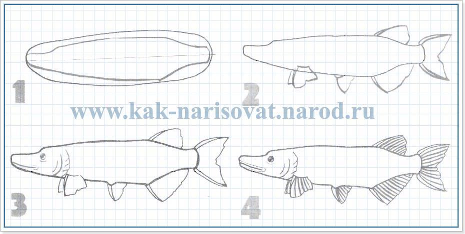 Как рисовать щуку