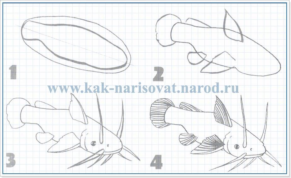 как рисовать рыб