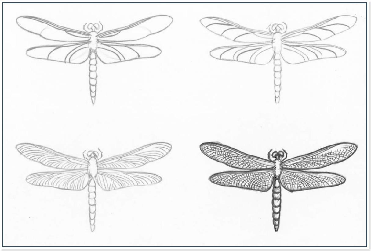 Как научиться рисовать стрекоз