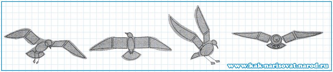 как нарисовать птицу в полете
