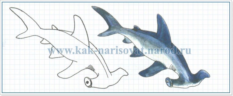 Как рисовать акулу
