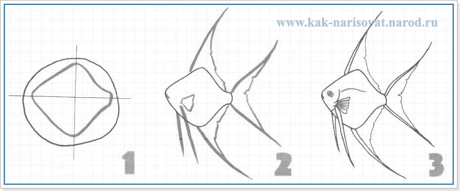 Как нарисовать аквариумную рыбку скалярию