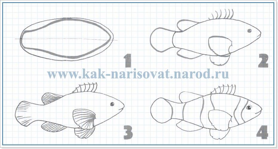 Как рисовать рыбу клоуна