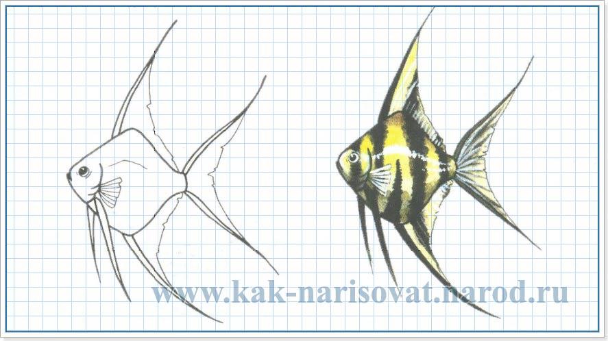 Учимся рисовать аквариумную рыбку скалярию - карандашом - картинка