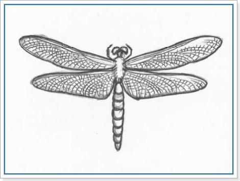 Нарисованная стрекоза
